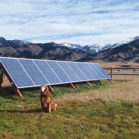 Dog and PV System
